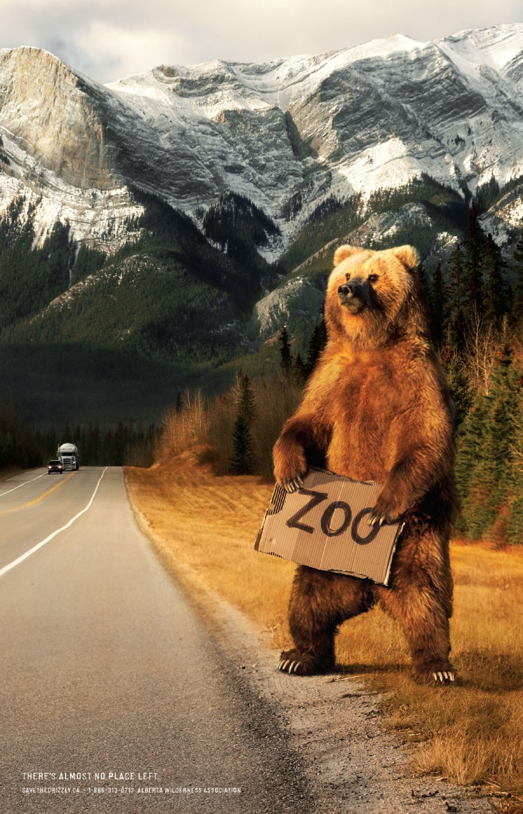save-the-grizzly-ZOO-poster