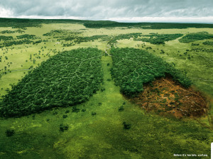 WWF: Lungs