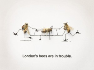 London's Bees are in Trouble