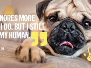 A person is the best thing to happen to a shelter pet