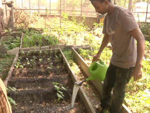 Meet the Refugee Gardeners