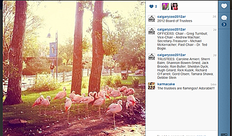 Calgary Zoo releases the world's first annual report on Instagram
