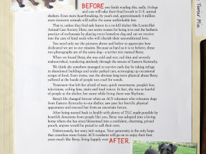 Long Copy returns with this ad from The Animal Care Society