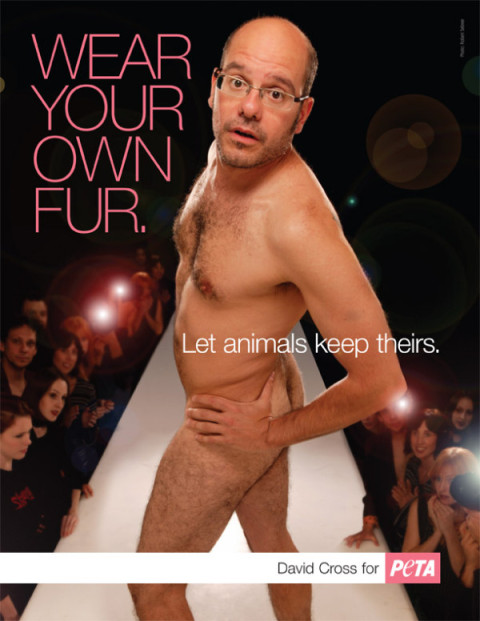 David Cross's PETA ad is actually pretty awesome