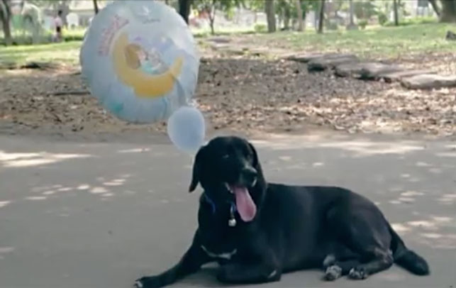 Unidog: These dogs have a dream