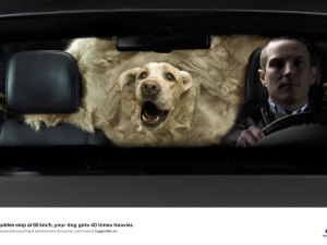 Your dog at 50 km/h