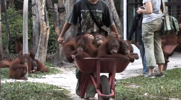 Greenpeace: The video Procter & Gamble don't want you to see.