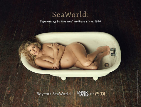 PETA proposes pregnant pause for SeaWorld