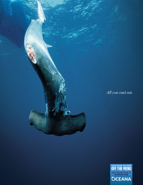 Oceana: Shark Finning All you cant eat