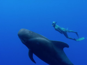 That one major difference between the whale and the human race