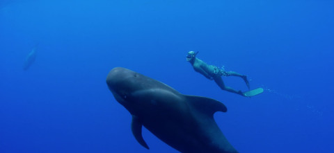 The one major difference between the whale and the human race