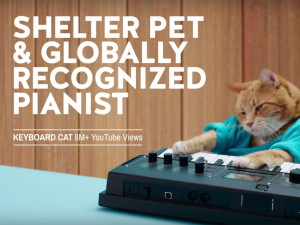 Furry celebrities promote shelter pets  #StartAStoryAdopt