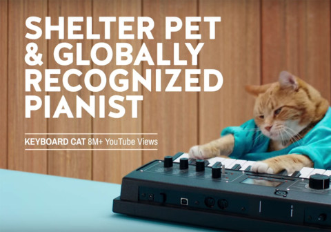 Furry celebrities promote shelter pets