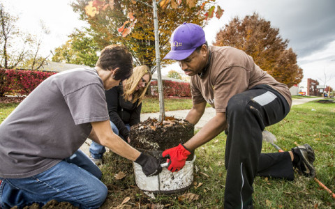 The Power of Planting Trees (and Storytelling) from the Nature Conservancy
