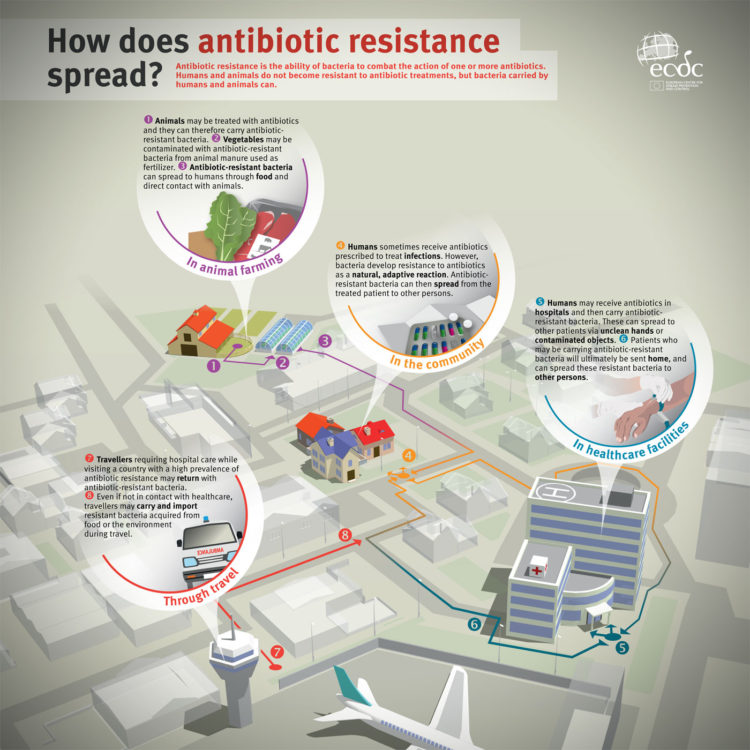 How does antibiotic resistance spread infographic