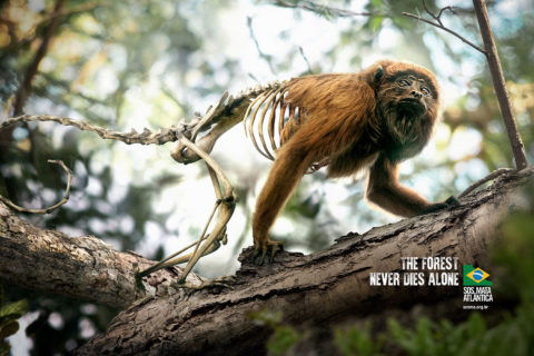 The Forest Never Dies Alone - SOS Mata Atlântica Foundation